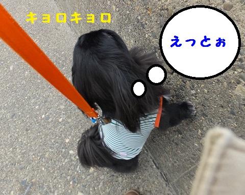 20131009mu5.jpg