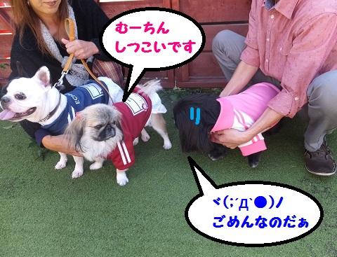 20131013mu46.jpg