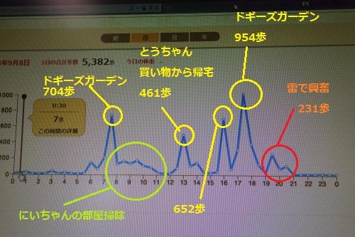 9月8日(日)グラフ
