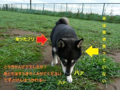 P1250938_convert_20130909161832ac1.jpg