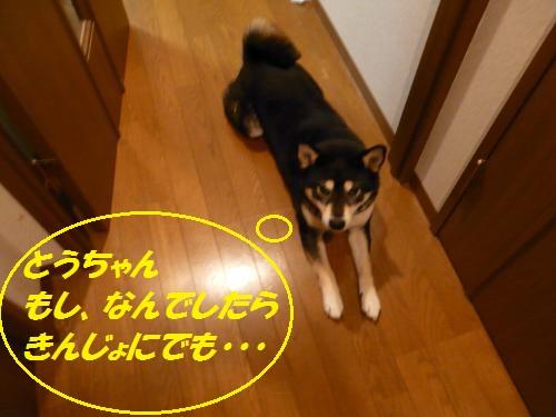 P1350148_convert_20131115093208fd1.jpg