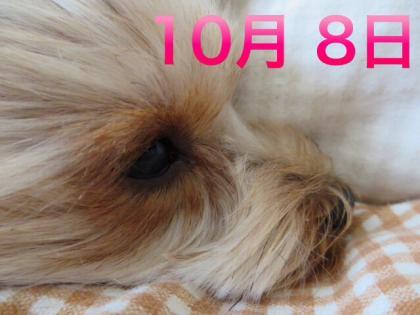 20131008191932323.jpg