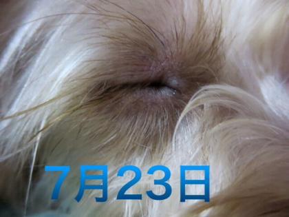 20131008191932622.jpg