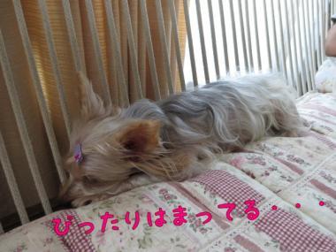 image_20130901141302c2d.jpg