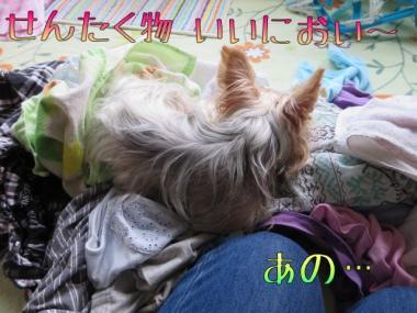image_20130903180021a5f.jpg
