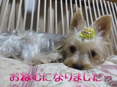 image_20130907215543c36.jpg
