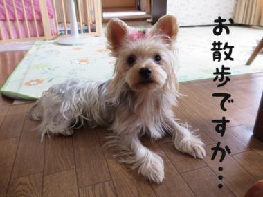 image_201309102204064b0.jpg