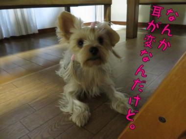 image_201309192043127f5.jpg