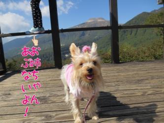 image_20130923195132917.jpg