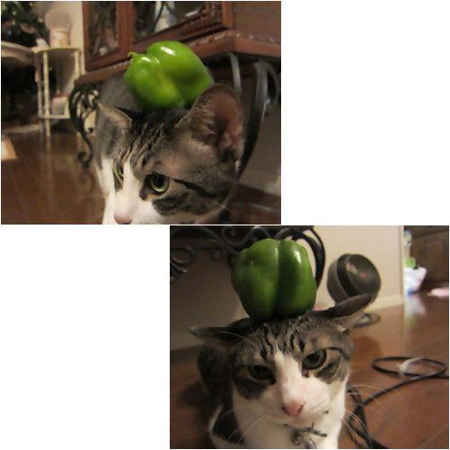 catsp