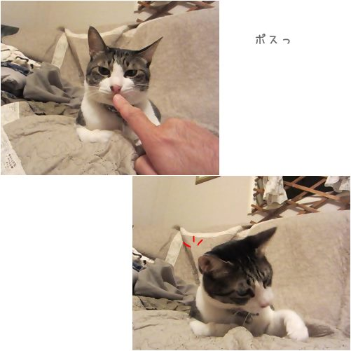 catsポス