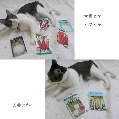 catsカブ