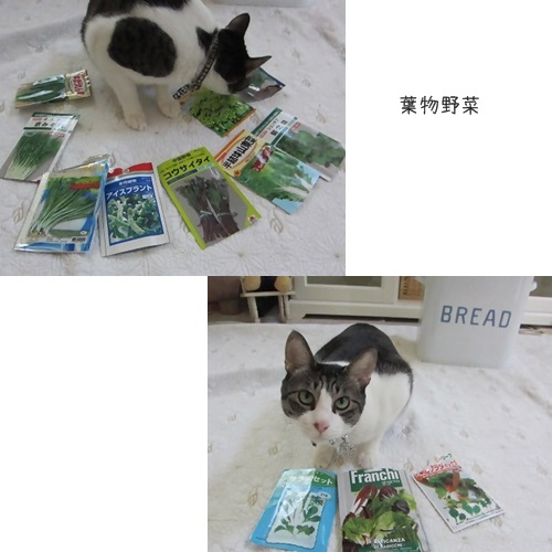 cats葉物