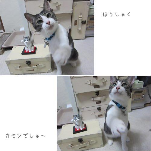 cats豊作