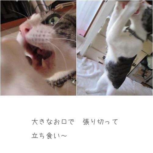 cats立ち食い