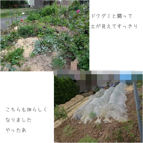 cats畑