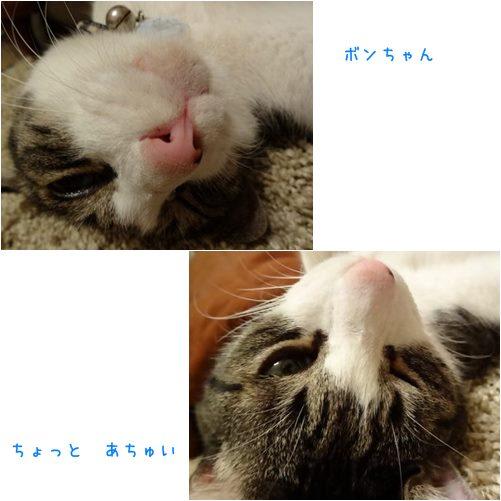 catsあつい