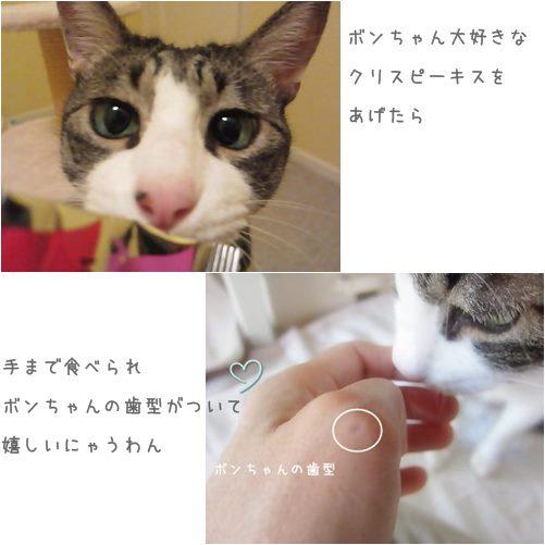 cats歯型