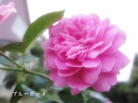 IMG_6866 2013 9 (216)