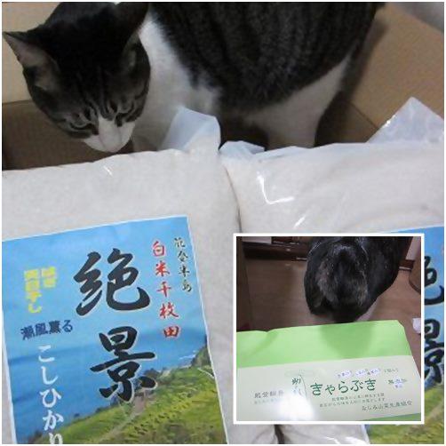 catsお米