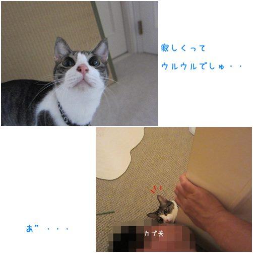 catsカプ夫