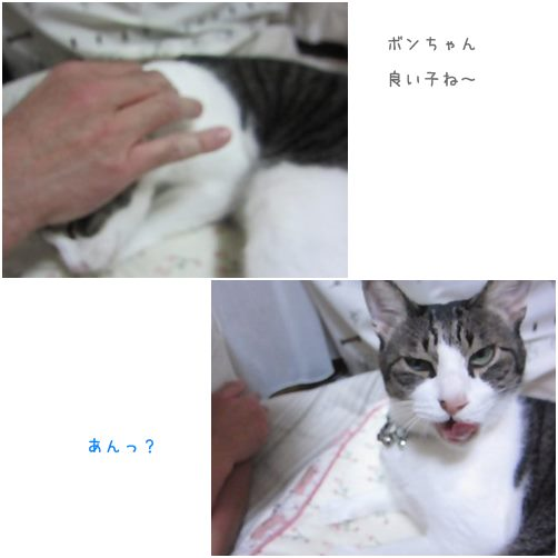 catsいいこ
