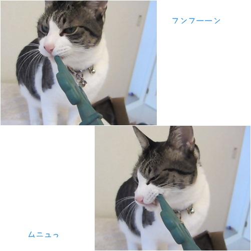catsお口