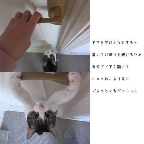 catsドア