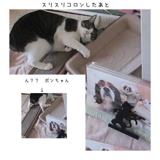 catsコロン