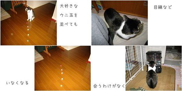 catsひどい1