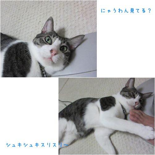 cat_20130906192205da3.jpg