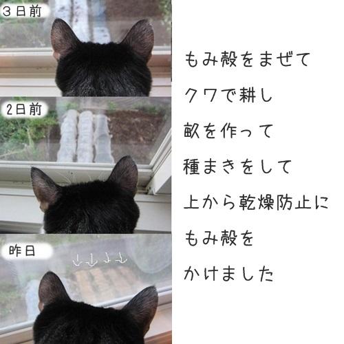 cat_20130918224419691.jpg