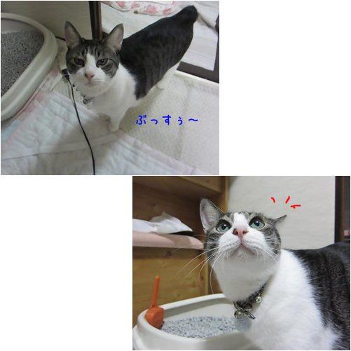 cat_20130927192344397.jpg