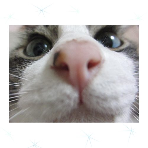 cat_201309281716445a0.jpg