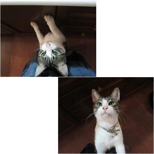 cats1_20130723164820.jpg
