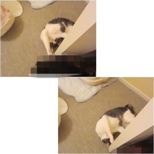 cats1_20130725235637.jpg
