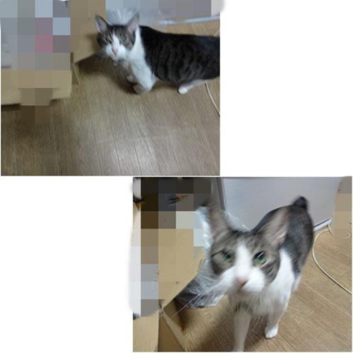 cats1_20130803193930d03.jpg