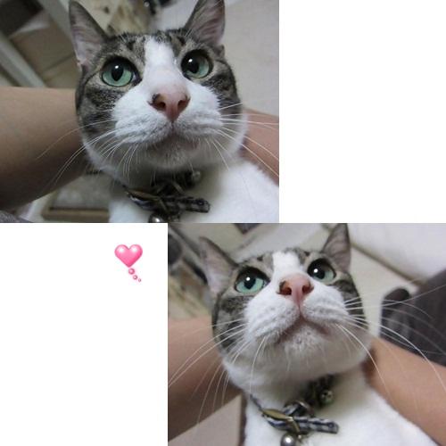 cats1_20130812153425cd6.jpg