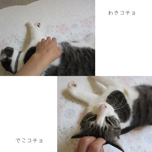 cats1_20130818125701677.jpg