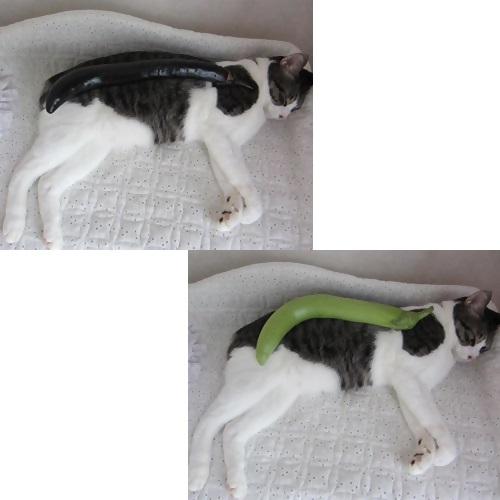 cats1_20130818134143e99.jpg