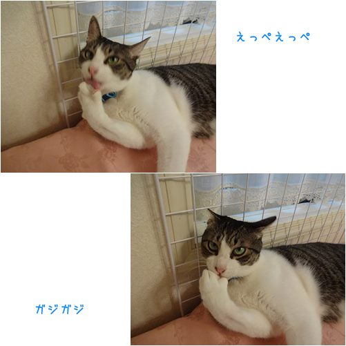 cats1_2013090418551961f.jpg