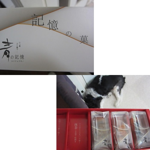 cats1_20130917185705093.jpg