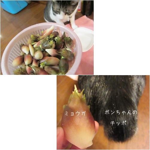cats1_20131006010114762.jpg