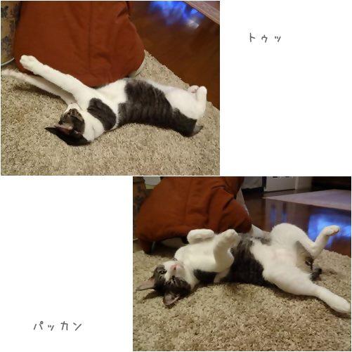 cats1_20131007162947afd.jpg