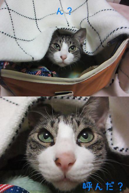 cats1_20131025193200f46.jpg