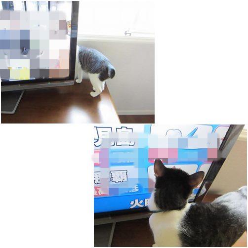 cats1_2013102619360349a.jpg