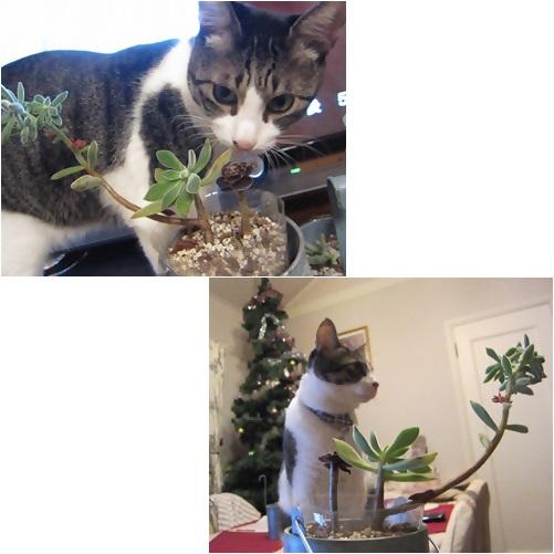 cats1_20131028232115d7c.jpg