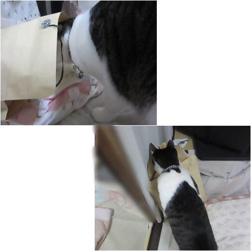 cats1_20131201155800cab.jpg