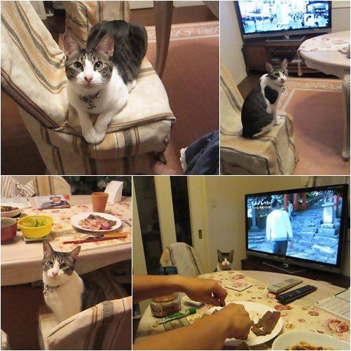 cats2_20130723164822.jpg