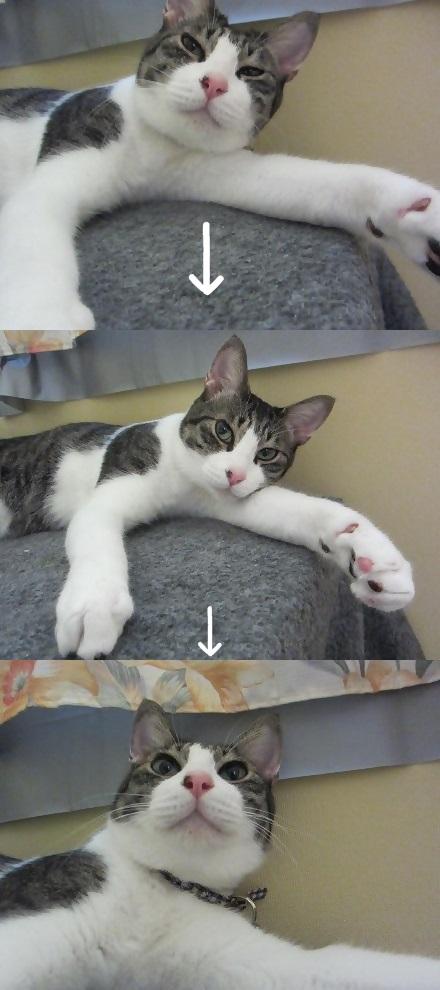 cats2_20130815005524c4d.jpg